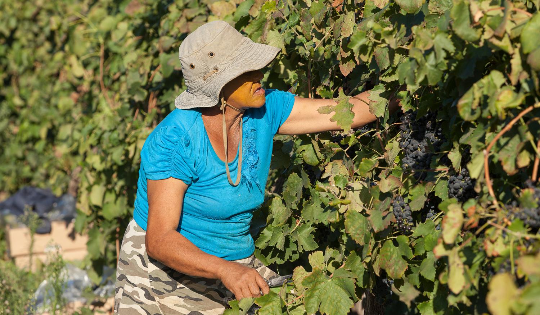 Nantes Wine 028 LR