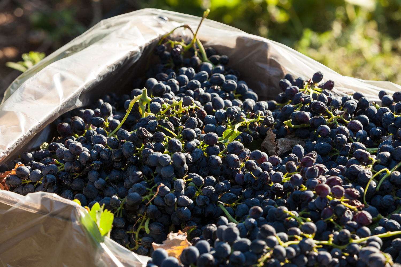Nantes Wine 031 LR