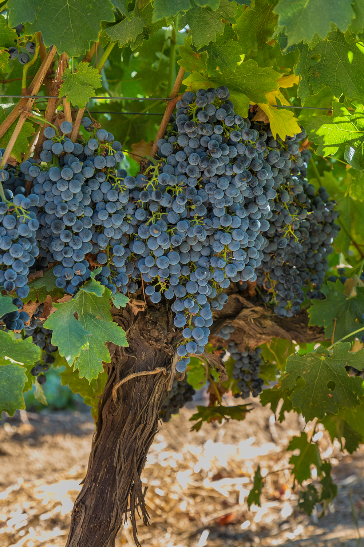 Nantes Wine 062 LR