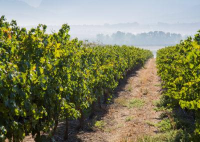 Nantes Wine 064 LR